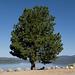 Portola Lake Davis (0202)