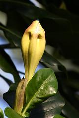 Schlange oder Blüte? (Wilhelma)