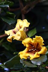 Blüten (Wilhelma)