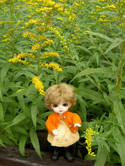 Eggie and late autumn flowers