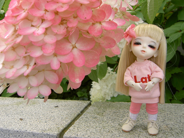 Lumi and hydrangeas