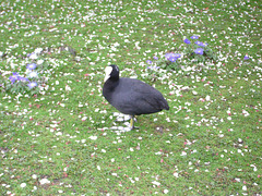 St. James's Park: stoic bird