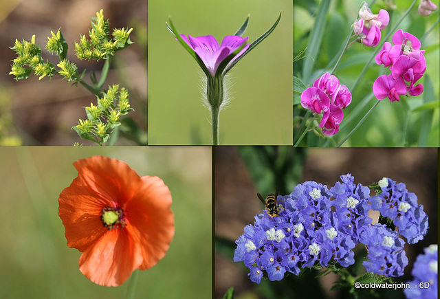 What's flowering in your garden this morning?