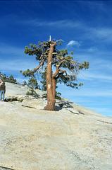 32-tree_by_olmstead_pt_ig_trim_adj