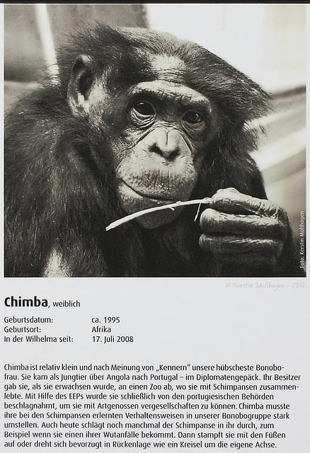 Bonobo-Steckbrief: Chimba (Wilhelma)