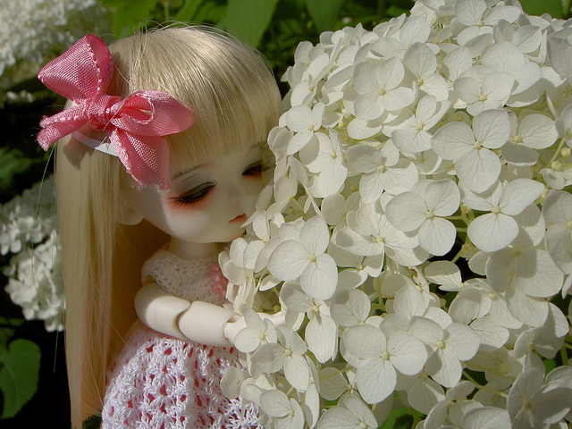 Lumi and flowers
