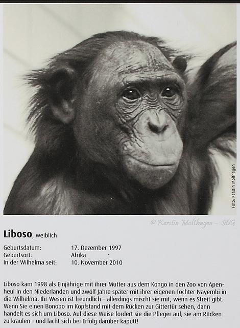 Bonobo-Steckbrief: Liboso (Wilhelma)