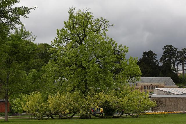 Baum in der Wilhelma