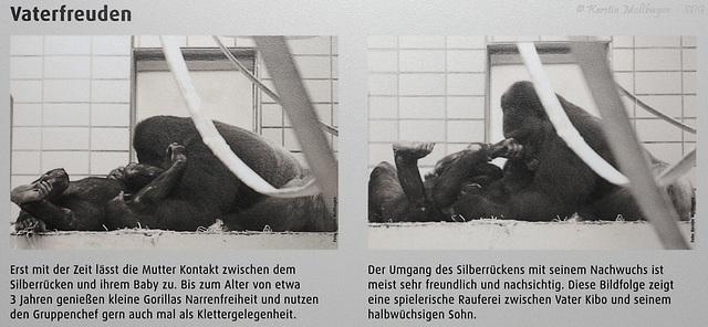 Beschilderung im neuen Menschenaffenhaus (Wilhelma)