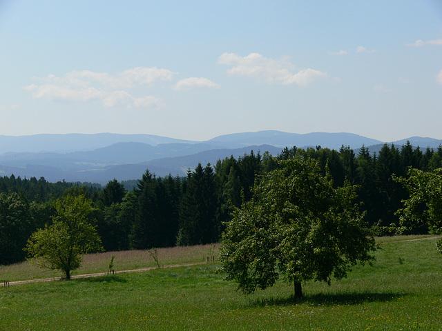 Schöner bayrischer Wald