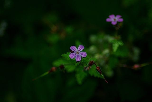 kwiatusek