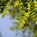 10 Week Picture Projects: TREES, Week 2--Green Leaves: Glowing Leaves