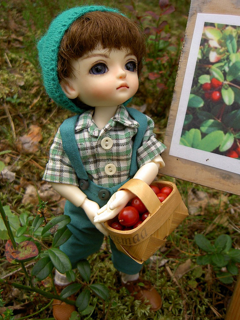 Sampo and lingonberries