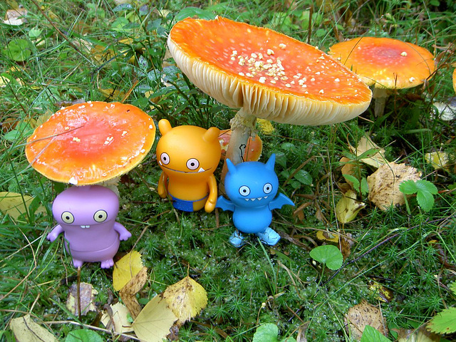 Uglies and toadstools