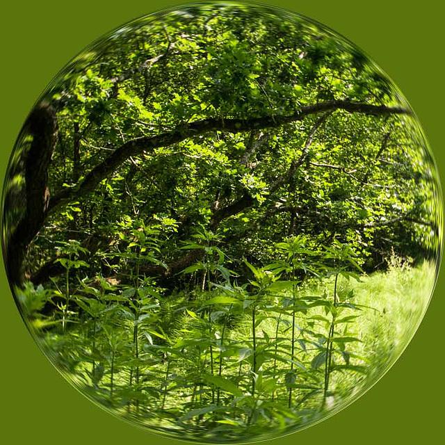around the woods