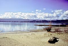 06-shoreline_adj