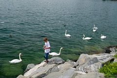 amongst the swans
