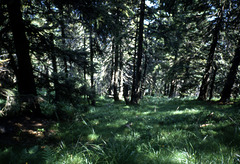 Schwarzwald anno 1994