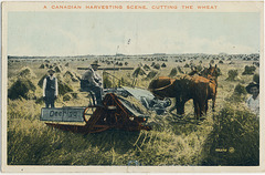 A Canadian Harvesting Scene, Cutting the Wheat