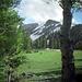4-22-meadow_ig_adj