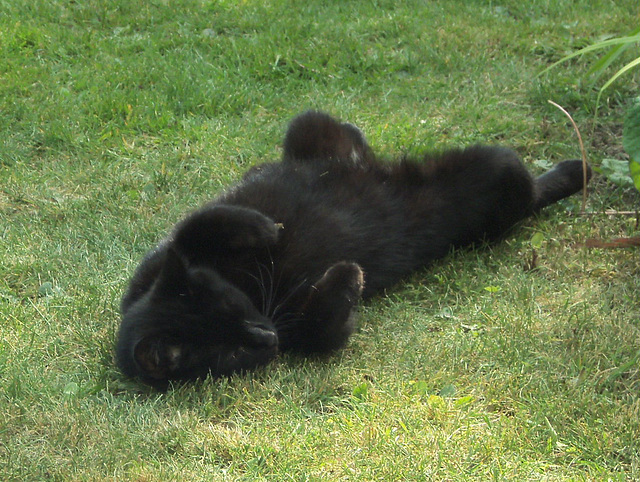 Pippin horizontal on the grass