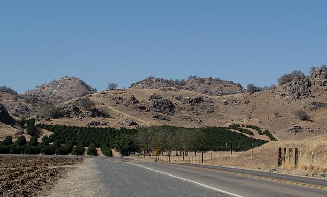 Tulare County, CA orange groves (0397)