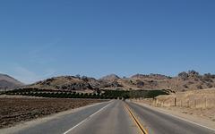Tulare County, CA orange groves (0398)