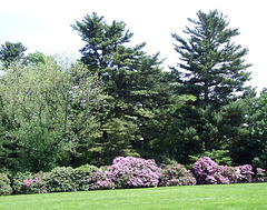 The Plantings Along the Front Lawn of Old Westbury Gardens, May 2009