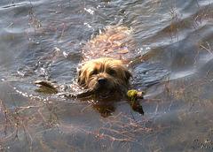 Montrose The Border Terrorist Swimming
