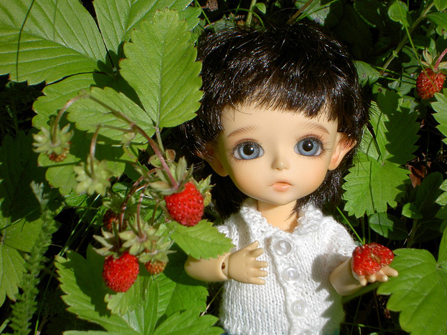 Algol and wild strawberries