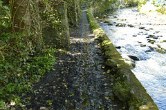 Isle of Man 2013 – The muddy path