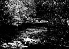 Forest  River-2bw