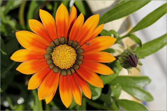 Fleur ciblée