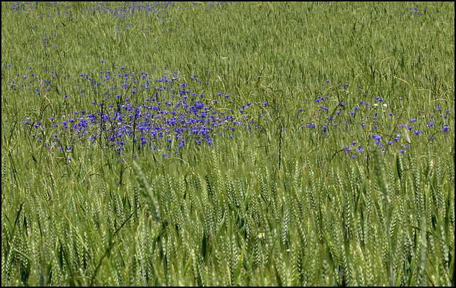 Conter fleurette est plus sympa que compter le blé