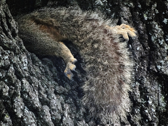 Some days are just like that Squirrel !