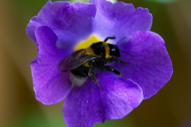 busy bee!