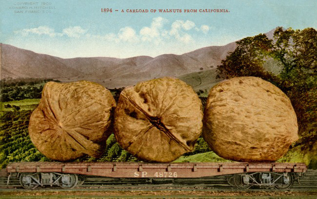 A Carload of Walnuts from California