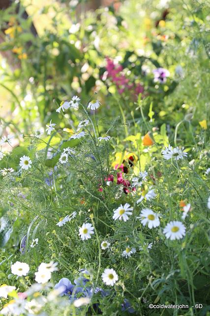 Afternoon stroll round the garden