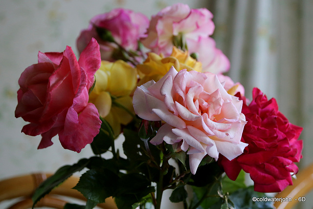 Garden Roses still blooming faster than I can cut them...