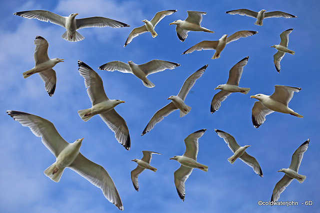 Seagulls wheeling above the pond