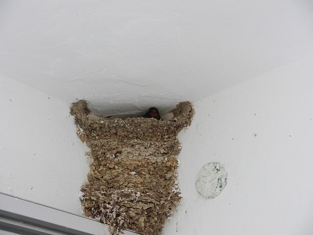 watching swallow