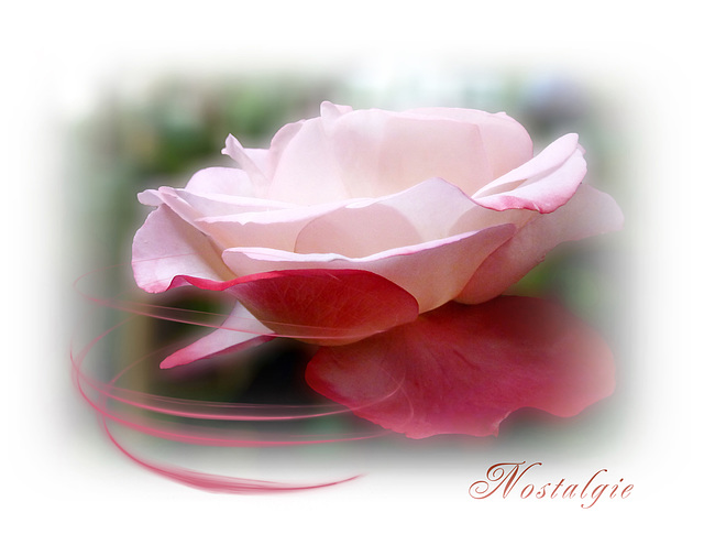 Rose Nostalgie ... poetry for the eyes ♥