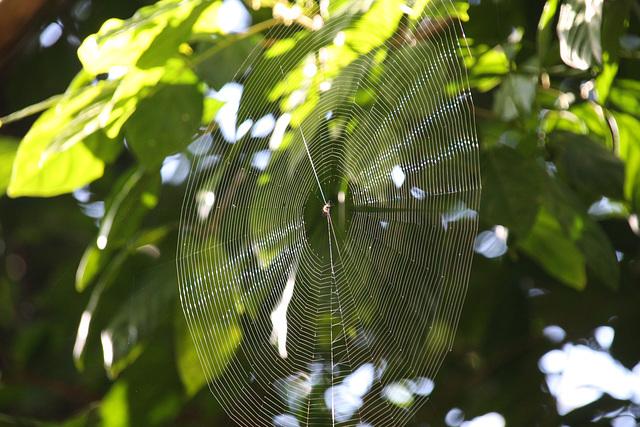 Rainforest website