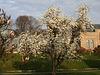 Magnolie im Morgenlicht (Wilhelma)