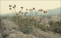 Poesia da terra sedenta