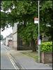 bus stop and acacia tree