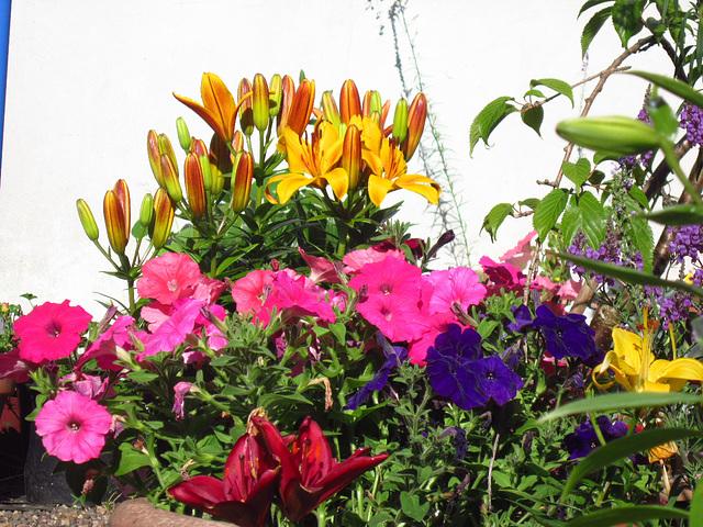 Lovely splash of colour