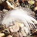 Lovely little feather - from Jonathon?
