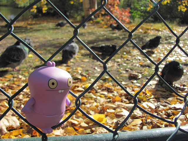 Babo and birds