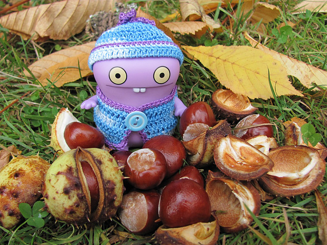 Babo and horse chestnuts